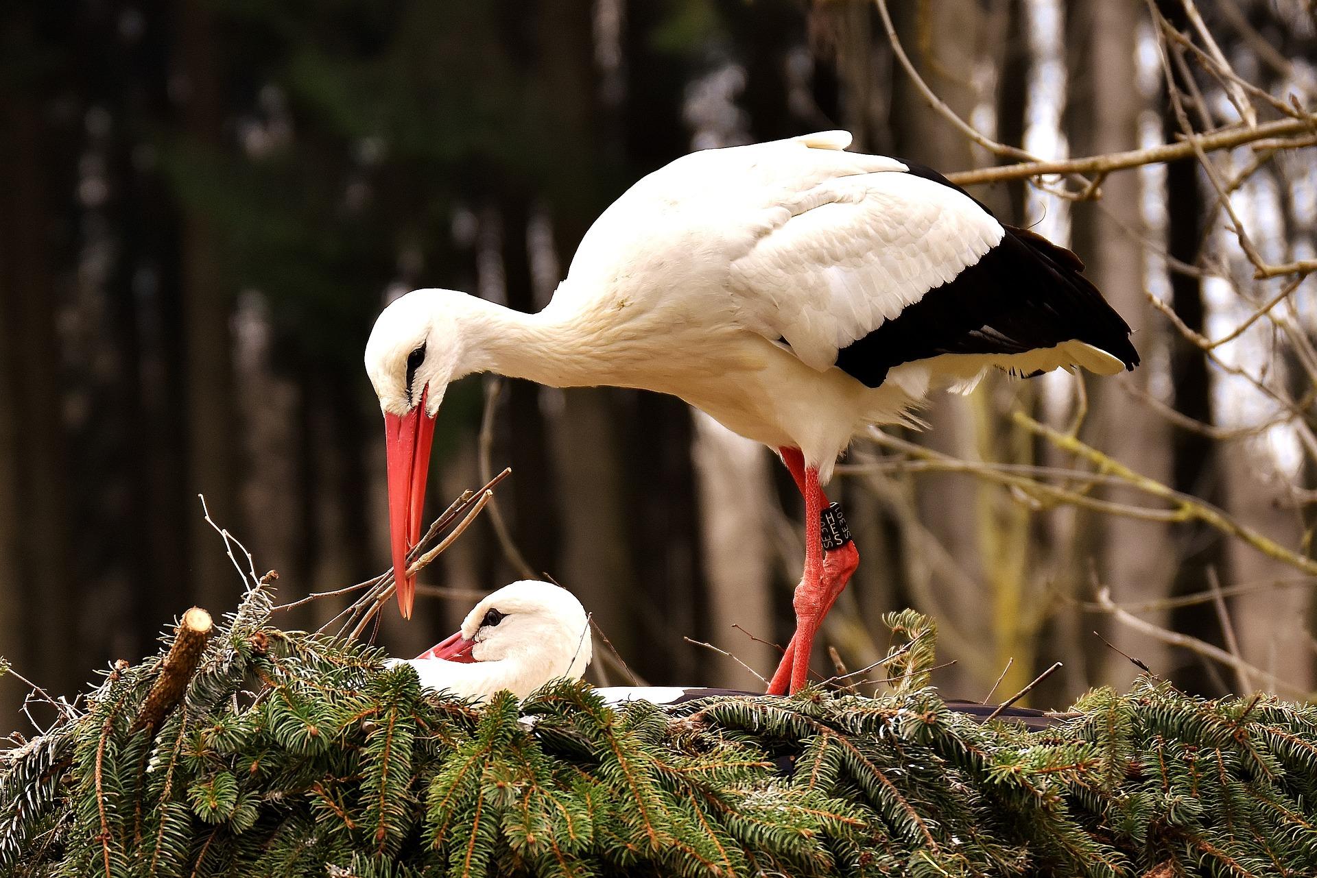 Althea Feng Shui stork